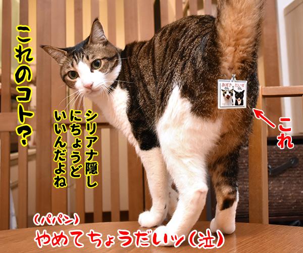 だいずさんのキーホルダーができたのよッ 猫の写真で4コマ漫画 4コマ目ッ
