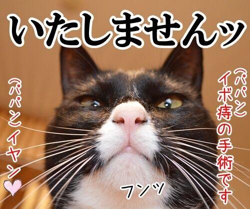 ドクターX 其の一 猫の写真で4コマ漫画 4コマ目ッ