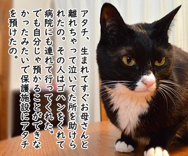 だいずさんとの出会い 猫の写真で4コマ漫画 1コマ目ッ