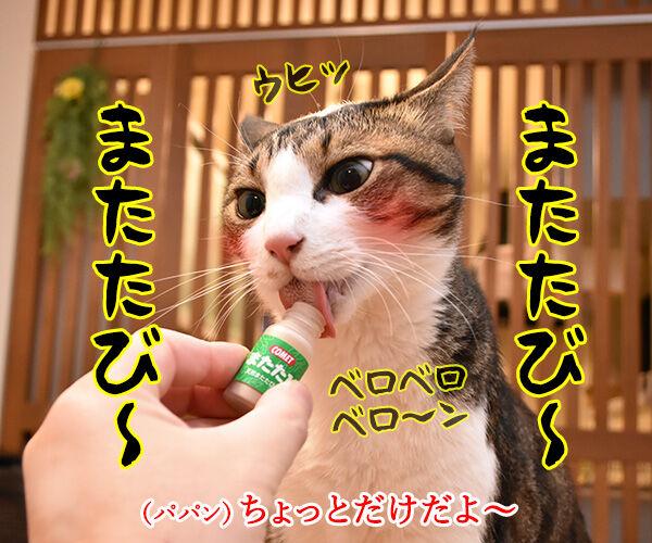 またたび LOVE 猫の写真で4コマ漫画 1コマ目ッ