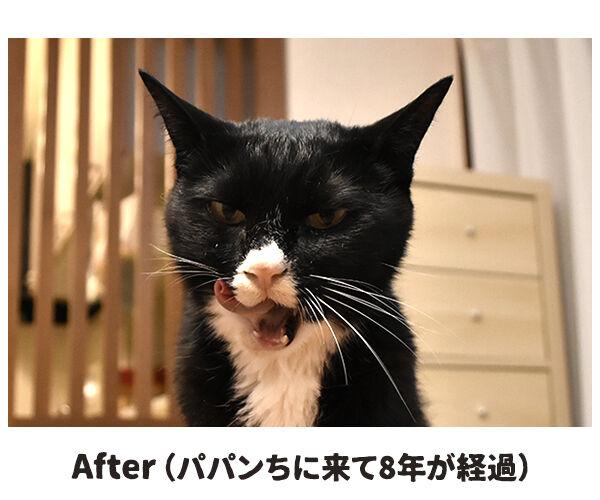 愛情を受け続けた猫ちゃんがとってもかわいくなったんですってッ 猫の写真で4コマ漫画 3コマ目ッ