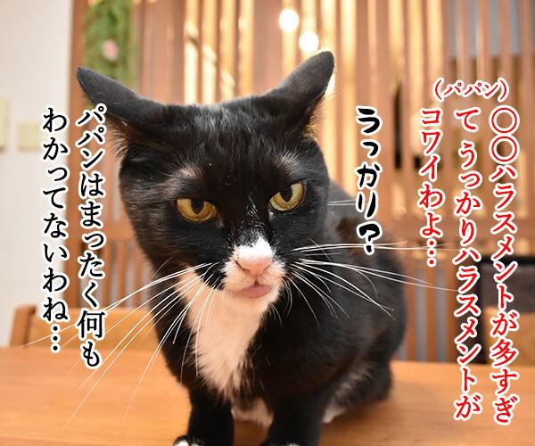 ハラミ会って美味しいのー? 猫の写真で4コマ漫画 3コマ目ッ