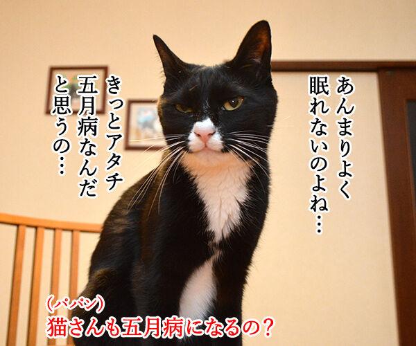 五月だから 猫の写真で4コマ漫画 3コマ目ッ
