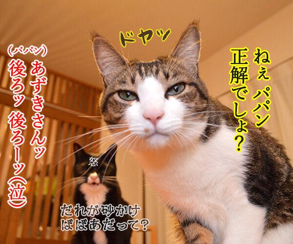 だいずさんにもご試食いただきましたッ 猫の写真で4コマ漫画 4コマ目ッ