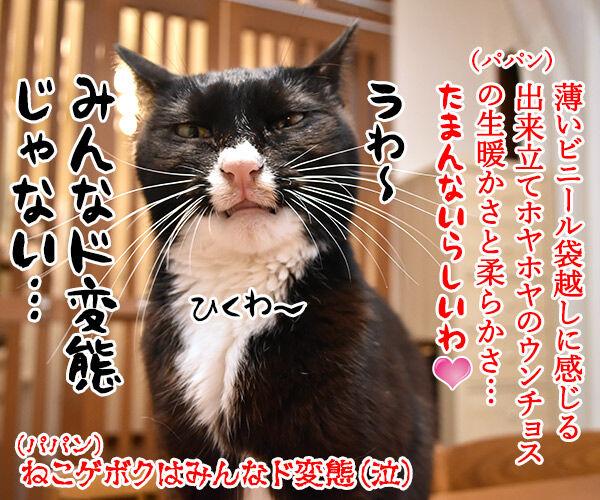 ウンチョスの片づけ方にたくさんコメントいただいたのッ 猫の写真で4コマ漫画 4コマ目ッ