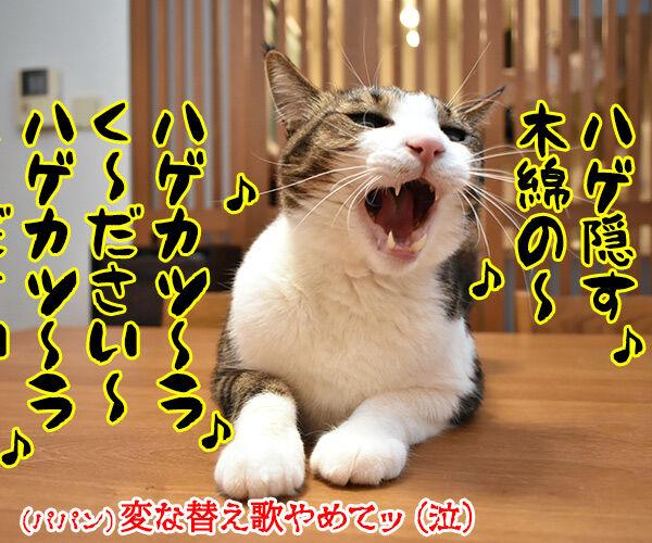 筒美京平さんのご冥福をお祈り申し上げます 猫の写真で4コマ漫画 4コマ目ッ