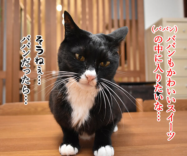 フルーツタルトにゃんことロールケーキにゃんこ 猫の写真で4コマ漫画 3コマ目ッ