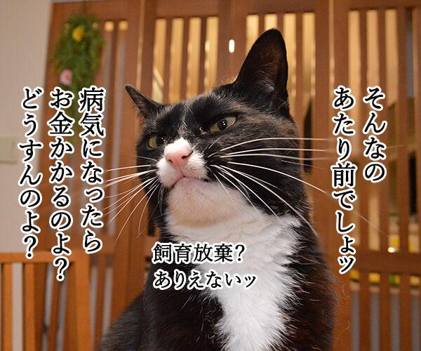 ペットを飼うには経済力は必要か? 猫の写真で4コマ漫画 2コマ目ッ
