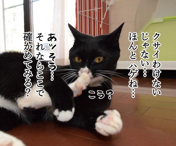 疑惑 其の一 猫の写真で4コマ漫画 2コマ目ッ