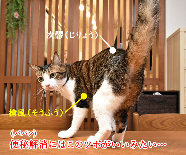 猫さんにもツボがあるんですってッ 猫の写真で4コマ漫画 2コマ目ッ