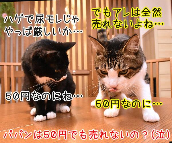 メルカリってご存知? 猫の写真で4コマ漫画 4コマ目ッ