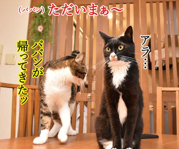 泣けちゃう漫画『おじさまと猫』って知ってる? 猫の写真で4コマ漫画 3コマ目ッ