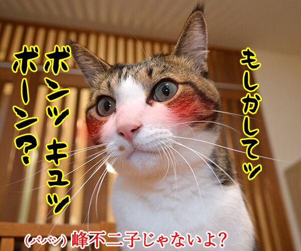 『ボーン』シリーズ最新作『ジェイソン・ボーン』が公開されたのよッ 猫の写真で4コマ漫画 2コマ目ッ