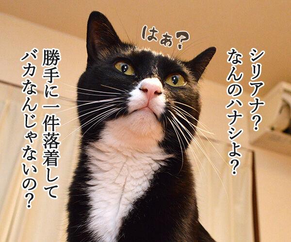 遠山のあずきさん 其の二 猫の写真で4コマ漫画 1コマ目ッ