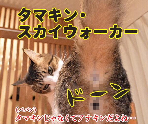 スター・ウォーズでダジャレ4連発ッ!! 猫の写真で4コマ漫画 2コマ目ッ