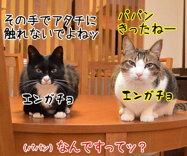 やってるね 猫の写真で4コマ漫画 3コマ目ッ