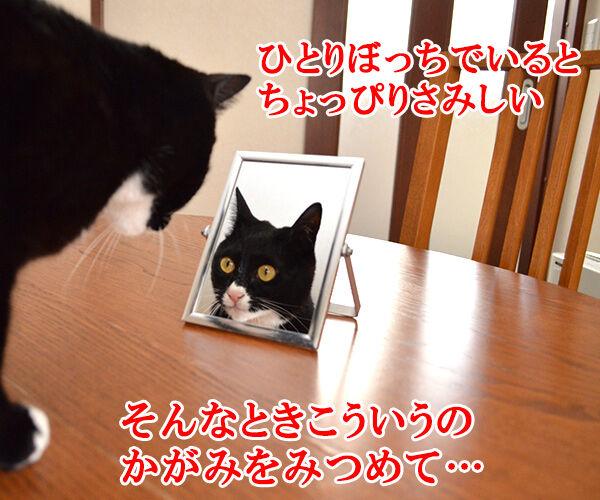 キャンディ キャンディ 猫の写真で4コマ漫画 1コマ目ッ
