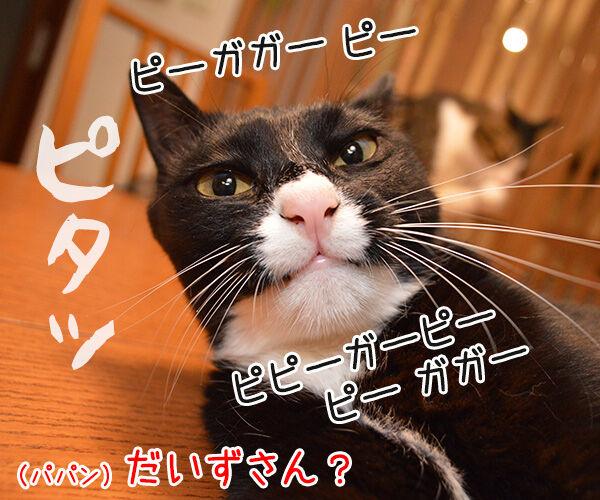 だいずの秘密 猫の写真で4コマ漫画 3コマ目ッ
