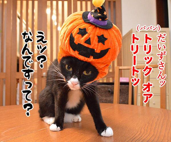 お菓子くれなきゃイタズラしちゃうぞ♥ 猫の写真で4コマ漫画 3コマ目ッ