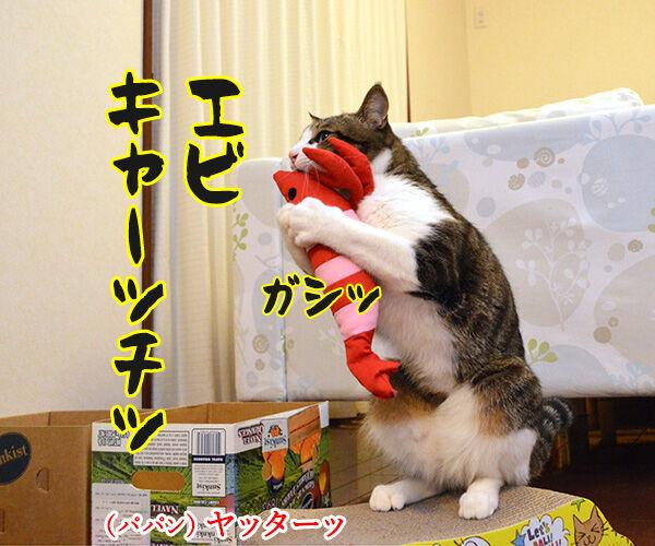 エビキャッチ 其の一 猫の写真で4コマ漫画 2コマ目ッ