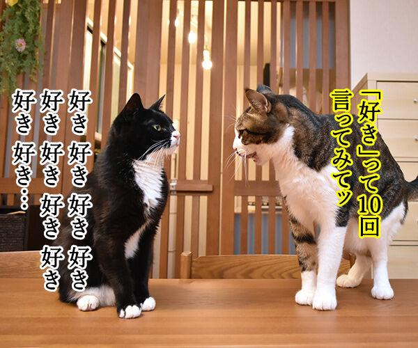 「好き」って10回言ってみてッ 其の二 猫の写真で4コマ漫画 1コマ目ッ