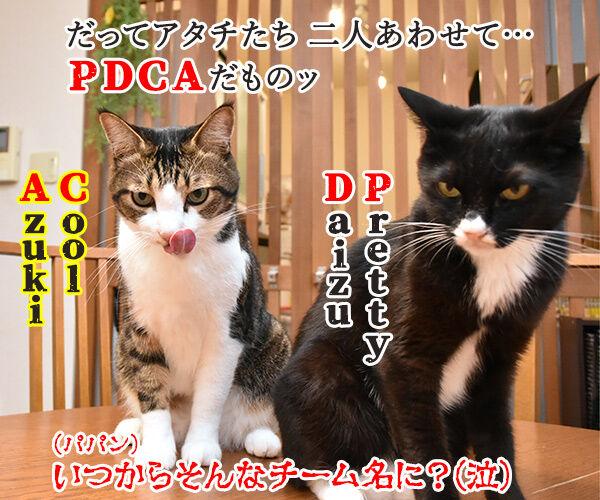 PDCAができてないって怒られたの 猫の写真で4コマ漫画 4コマ目ッ