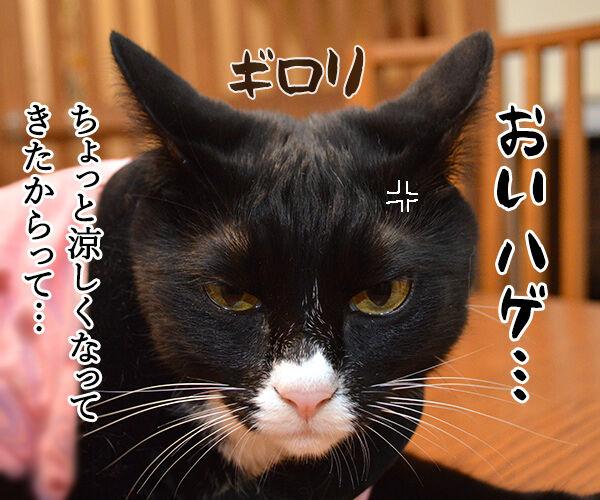 ダサくない? 猫の写真で4コマ漫画 1コマ目ッ
