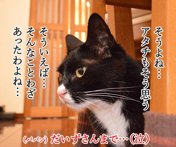 ねことじいちゃん 猫の写真で4コマ漫画 3コマ目ッ