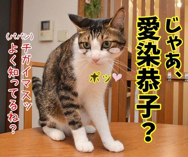 愛ちゃんが入籍してたんですってッ 猫の写真で4コマ漫画 3コマ目ッ
