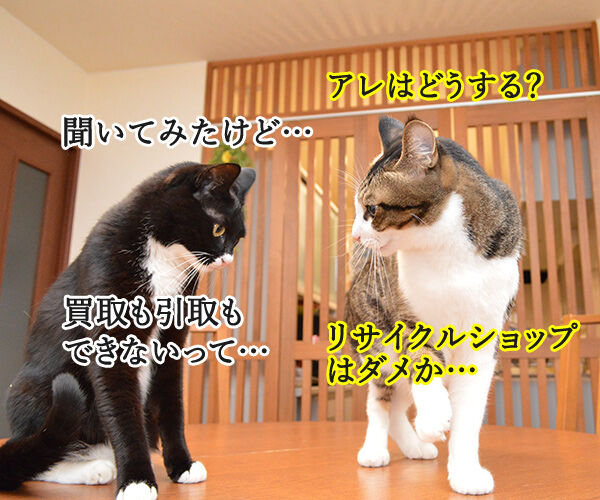 大掃除のついでにいろいろ捨てちゃうわよッ 猫の写真で4コマ漫画 3コマ目ッ