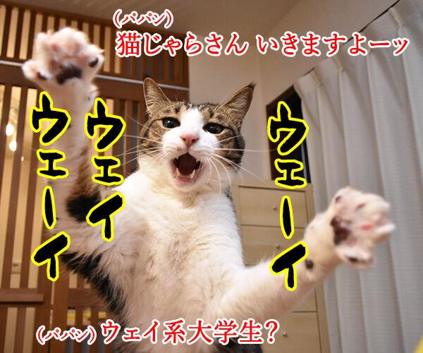 猫じゃらさんでウェイウェーイ 猫の写真で4コマ漫画 1コマ目ッ
