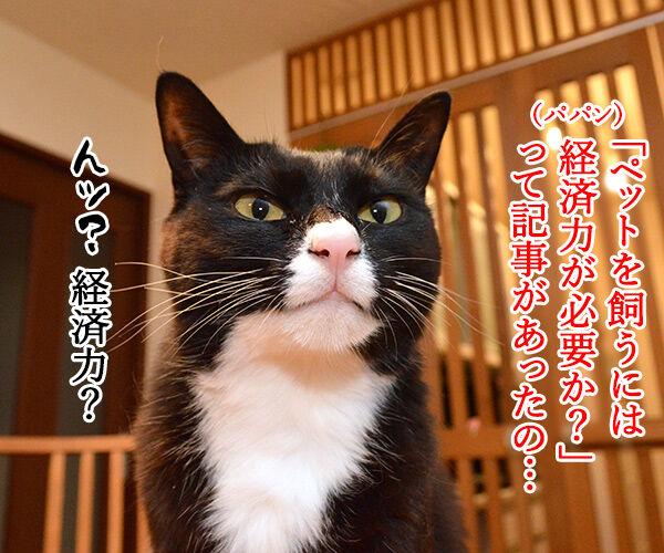 ペットを飼うには経済力は必要か? 猫の写真で4コマ漫画 1コマ目ッ