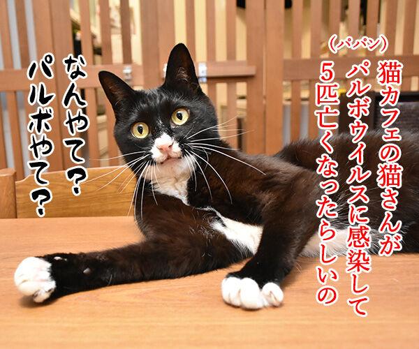 猫カフェでパルボウィルス感染して臨時休業なんですってッ 猫の写真で4コマ漫画 1コマ目ッ