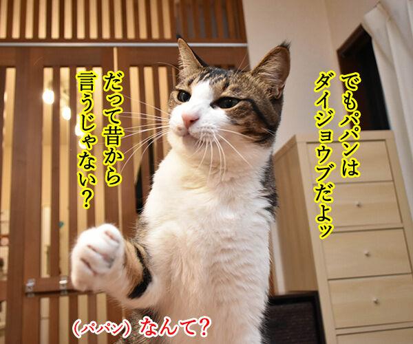 お酒のトラブルには気をつけなくちゃねッ 猫の写真で4コマ漫画 3コマ目ッ