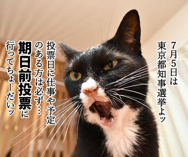 期日前投票に行ってちょーだいッ 猫の写真で4コマ漫画 1コマ目ッ