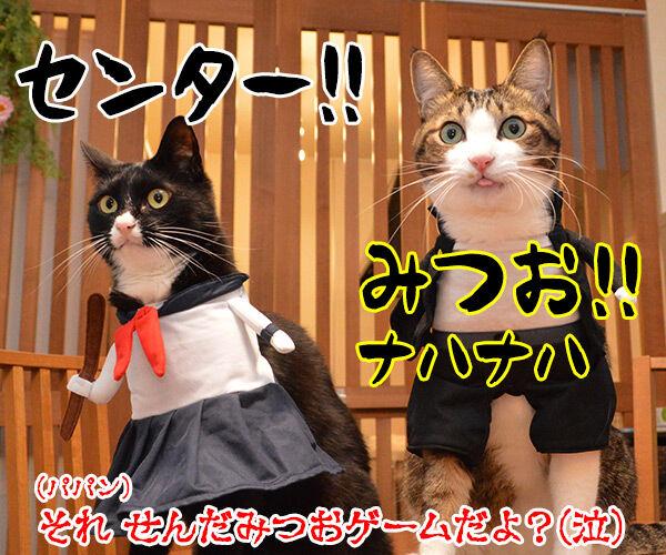 受験生のみんなッ センター試験ガンバルノヨー 猫の写真で4コマ漫画 4コマ目ッ