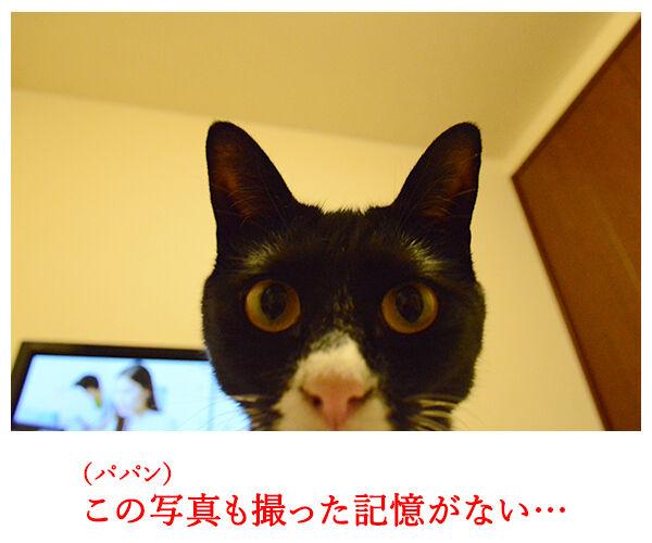 自撮り 猫の写真で4コマ漫画 2コマ目ッ