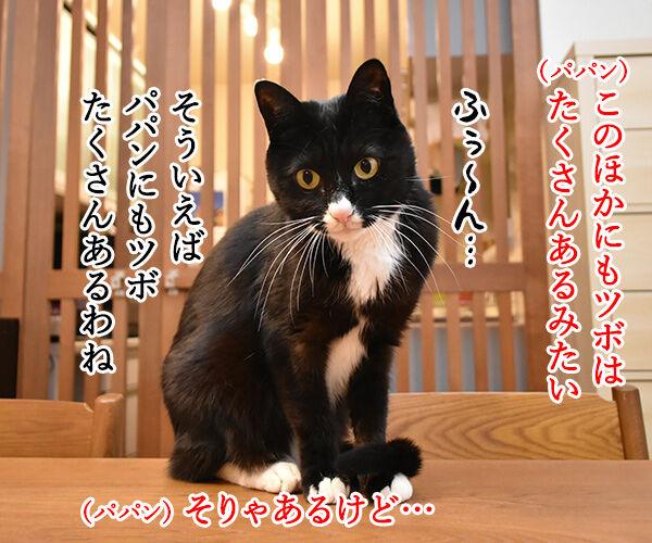 猫さんにもツボがあるんですってッ 猫の写真で4コマ漫画 3コマ目ッ