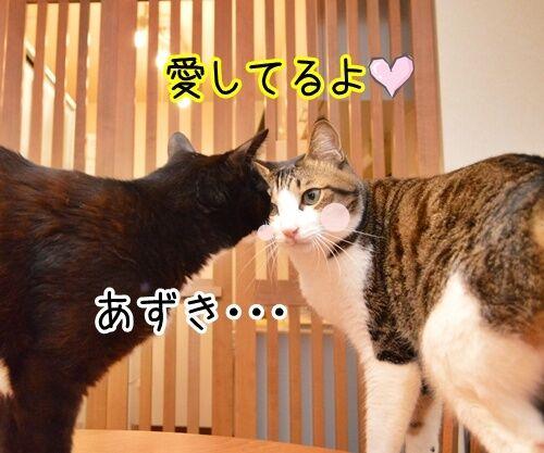 愛してるって言って 猫の写真で4コマ漫画 3コマ目ッ