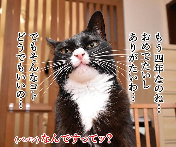 今日から5年目突入デースッ 猫の写真で4コマ漫画 2コマ目ッ
