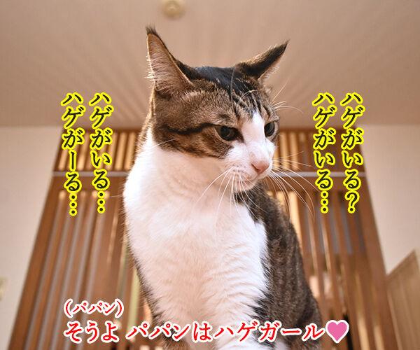 パパンは東京のハゲ… 猫の写真で4コマ漫画 2コマ目ッ