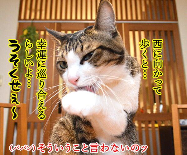 2月4日は『西の日』なんですってッ 猫の写真で4コマ漫画 2コマ目ッ