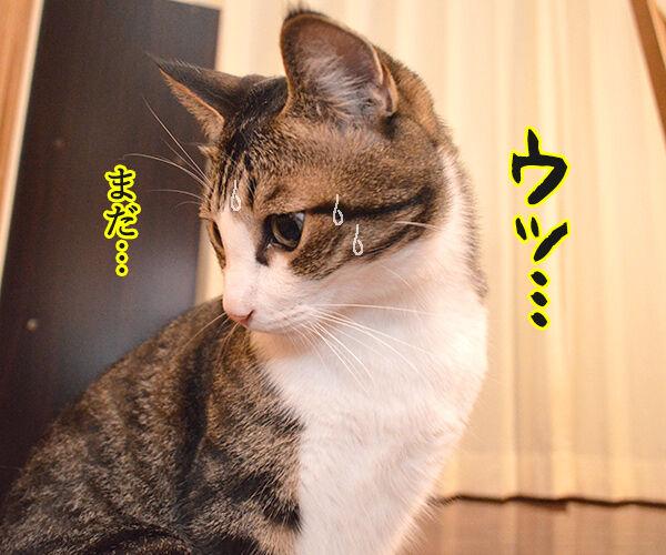 ケンカしちゃった 猫の写真で4コマ漫画 3コマ目ッ
