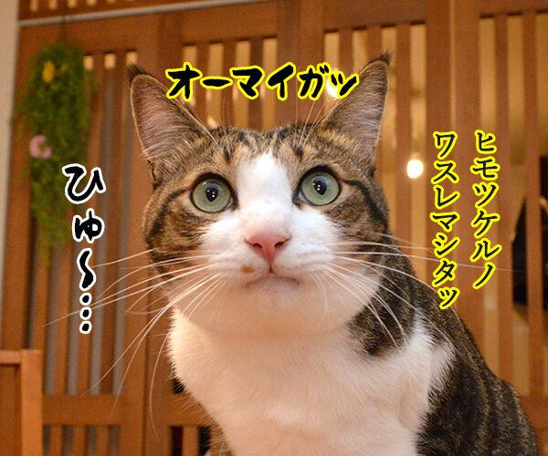 海外旅行でバンジージャンプ 猫の写真で4コマ漫画 4コマ目ッ