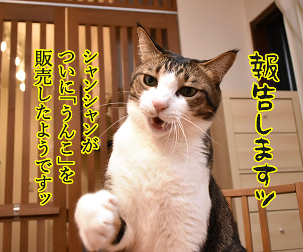 シャンシャンがうんこを販売したんですってッ 猫の写真で4コマ漫画 1コマ目ッ
