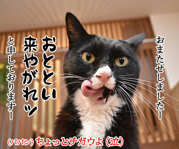 OLだいずの電話応対 其の二 猫の写真で4コマ漫画 4コマ目ッ