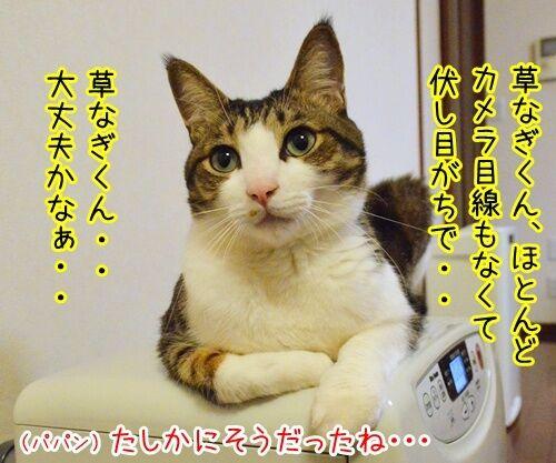 スマスマ緊急生放送を見て…… 猫の写真で4コマ漫画 2コマ目ッ