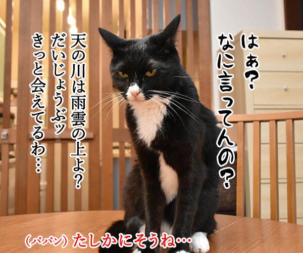 七夕なのにあいにくの雨なの… 猫の写真で4コマ漫画 2コマ目ッ