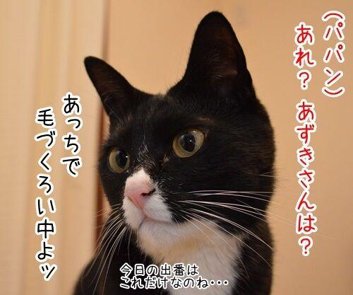あずきさんを呼ぶとき 猫の写真で4コマ漫画 1コマ目ッ