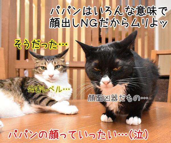 あずきさんとだいずさんの似顔絵を描いてもらったのッ 猫の写真で4コマ漫画 4コマ目ッ